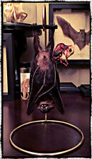 Hanging Bat on Gold Wire Stand, Oddities, Obsure, Macabre, Gothic