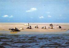 BG9840 seal insel sylt seehundbanke im wattenmeer  germany