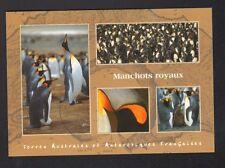 TERRES AUSTRALES & ANTARCTIQUES / T.A.A.F. / ILE CROZET , MANCHOTS ROYAUX