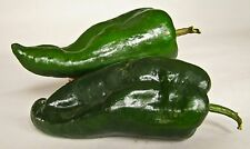 POBLANO CHILI PEPPER SEEDS * MILD FLAVOR * CHILI RELLENO DISH* 12 SEEDS PER PKT*