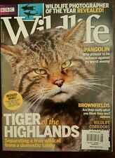Bbc Wildlife Tiger of Highlands Wildcat Tabby Pangolin Nov 2015 Free Shipping Jb