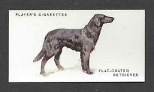 1931 UK Arthur Wardle Dog Art Body Player Cigarette Card FLAT COATED RETRIEVER