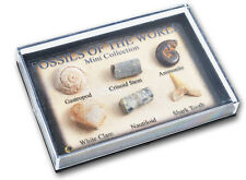 fossil Box fab educational geology dinosaur nature gift for the collector