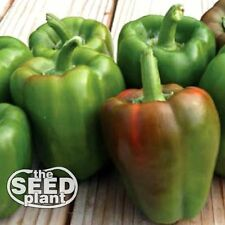 California Wonder Bell Pepper Seeds  -  75 SEEDS-SAME DAY SHIPPING