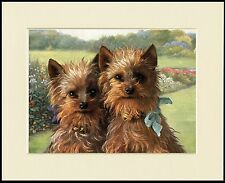 YORKSHIRE TERRIER TWO DOGS HEAD STUDY CHARMING DOG PRINT MOUNTED READY TO FRAME
