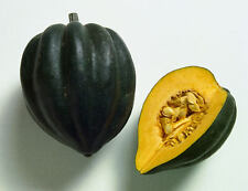 Squash Seeds ★ Acorn ★ Great With Butter and Lemon, or Brown Sugar ★ 10+ Seeds ★