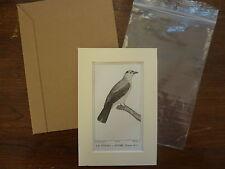 Gravure XIXè - BUFFON / PRETRE 1825 - oiseaux -  Titiri -  passe-partout
