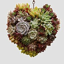 Iron Hanging Wreath Cacti Succulent Herb Flower Planter
