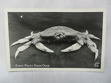 VINTAGE REAL PHOTO POSTCARD A VIEW OF A GIANT PACIFIC OCEAN CRAB UNUSED