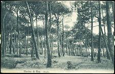 1910 - Marina di Pisa - Pineta