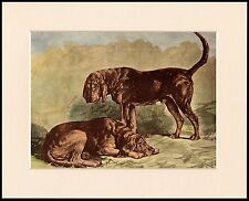 BLOODHOUND TWO DOGS LOVELY DOG PRINT MOUNTED READY TO FRAME