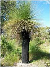 Balga W.A. Grass Tree Seed Very Drought Hardy Rockeries