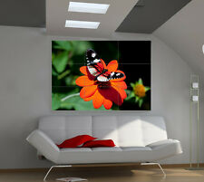 Beautiful Bright Butterfly giant animals poster print photo mural wall art ia504