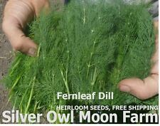 Fernleaf Dill seeds ~ a small container dill variety with big flavor.