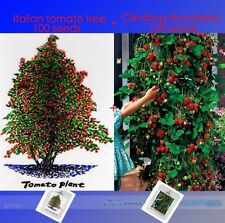 Italian Giant TOMATO Tree Seeds 100+ & Red Climbing STRAWBERRY Seeds 100+