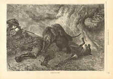 Hunter Shoots Wolf, Bull Dogs Attack Wolf, Vintage 1873 French Antique Art Print