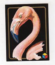 figurina card - AMICI DEL CUORE  - numero 91 FENICOTTERO ROSA