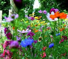 4oz All In One Wildflowers Mix(all purpose) Fertilizer,Seed.Mulch,Just sew,Water