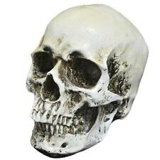 Realistic Faux Life Size Human Skull Head Skeleton Sculpture Statue Halloween