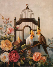 Cockatiel and Roses Art Print by Maxine Johnston - 16x20