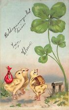 BC62046 husveti Easter Fetes Easter Greeting Poulets  hungary clover chick