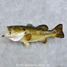 """#14377 E+ 