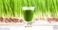ORGANIC WHEAT GRASS SEEDS - Human Health Juicing Sprouting - Dog Cat 500 Grams