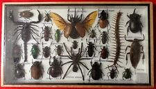 REAL EXOTIC HUGH 26 INSECT DISPLAY CENTIPEDE TAXIDERMY ENTOMOLOGY BEETLE INSECTS