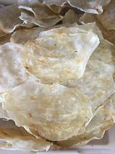 Dried Seafood Fish Maw Hua Jiao 花膠片 魚肚 3lb