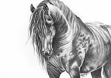 fine art print black horse gypsy cob stallion equine graphite pencil drawing