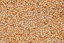 500 graines de SESAME à semer(Sesamum Indicum)G849 SEEDS SAMEN SEMILLAS SEMENTES