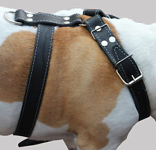 "High Quality Leather Walking Dog Harness 35""-39"" chest size Mastiff Great Dane"