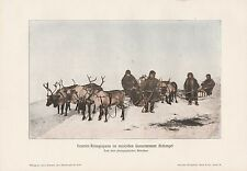 Renna alleanza Renna RENNA SLITTA ARCHANGELSK stampa a colori di 1906