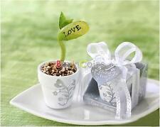 Mini Magic Bianco fagiolo Seeds regalo pianta crescente messaggio Parola amore