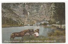 Horses Riejka kod Dubrovnika Dubrovnik Croatia 1910c postcard