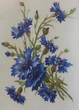 "4 Blue Cornflower Flower 3"" X 2""  Waterslide Ceramic Decals Tx"