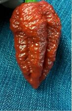 10 Chocolate Brown Bhutlah Seeds Fresh World Record Bhut Jolokia x Douglah HOT