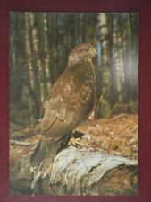 POSTCARD E3-23 ANIMALS BUZZARD BRITISH BIRDS
