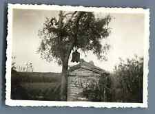 China, Old bell in a tree  Vintage silver print. Vintage China. 中国葡萄酒 . Tira