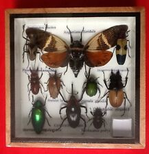 REAL EXOTIC HUGH 10 INSECT DISPLAY TAXIDERMY ENTOMOLOGY SCORPION BEETLE INSECTS