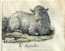 Stampa antica AGNELLO LAMB Cosmorama 1839 Old antique print sheeps