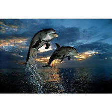 FLIGHT OF TWO DOLPHINS POSTER - 24x36 SHRINK WRAPPED - NATURE OCEAN 3733
