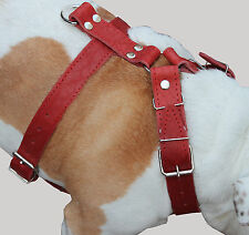 """High Quality Leather Walking Dog Harness 33""""-37"""" chest Cane Corso Mastiff Boxer"""