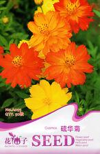50 Original Package Seeds Cosmos Seeds Cosmos Sulphureus Garden Flowers A095