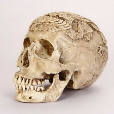 A CARVED Kapala Skull Human Anatomical Anatomy Head Medical Model lifesize *