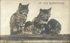 Kittens Kitty Cats In the Bleachers Rotograph Real Photo Card/Blank Backside