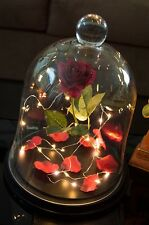Handmade Enchanted Rose in Glass Case Inspired by Beauty and the Beast