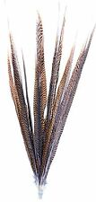 """Golden Pheasant Tail Feathers Natural Barred 12 Pcs 20""""-25"""" Long Crafts Hat 146s"""