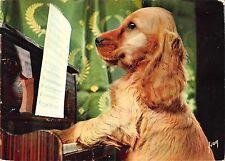BR57573 dog chien music animals