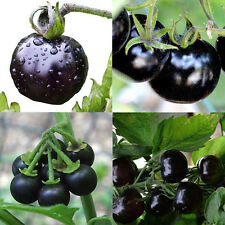 50PCS Rare Seeds Tomato Black Cherry Russian Heirloom Vegetable Seed Wholesale
